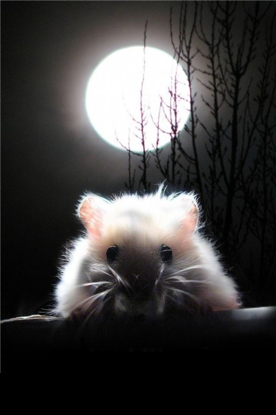Moon Over My Hammy