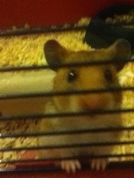 Smudge being nosey :-)
