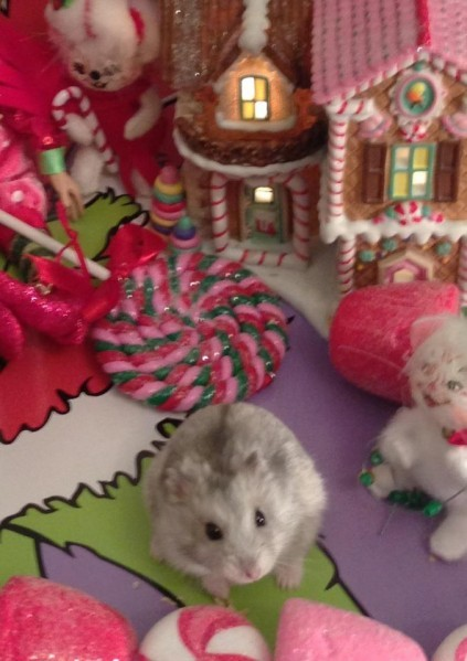 Pippy in Christmas Town