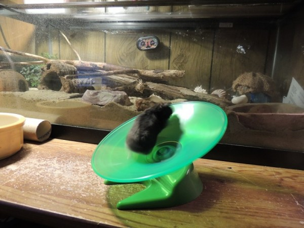 Cubby On The Play Ground's Flying Saucer
