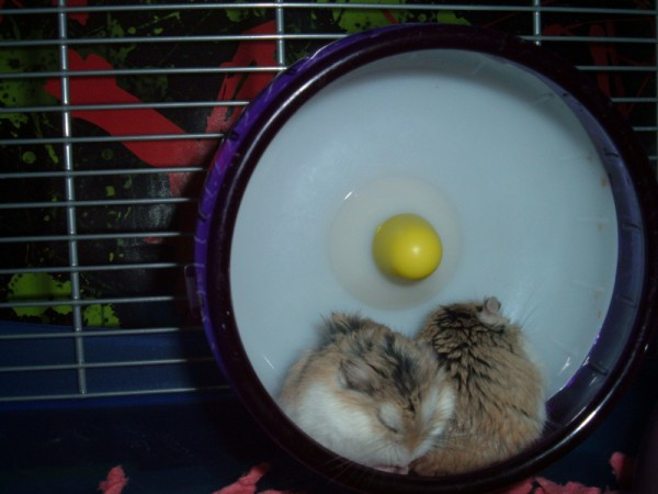 Finn and Jake snoozing in the wheel.