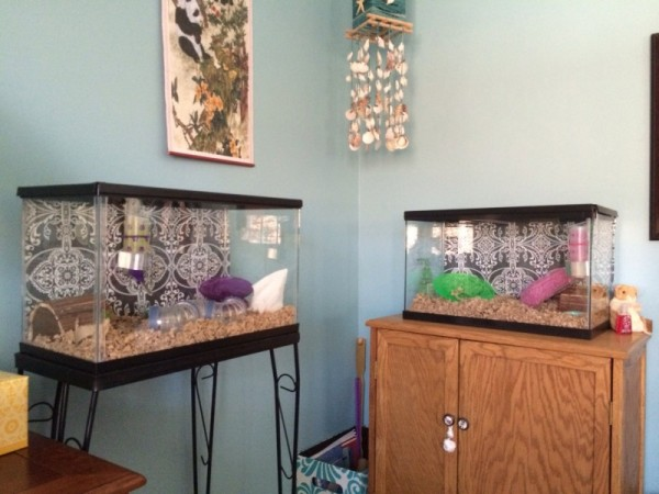 Lulu and Sandy's Cages