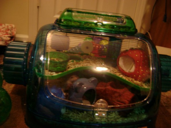 the hamster mansion