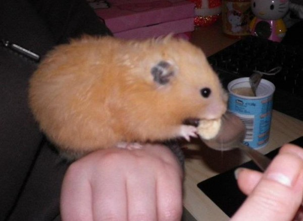 Cookie having a yummy treat